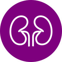 Purple circle with the white vector image of a prostate.